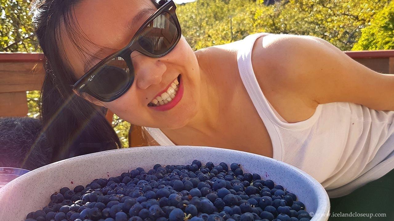 icelandcloseup.com picking wild blueberries