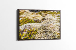 Natural Icelandic Moss Canvas Print