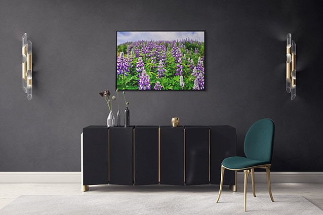 Eye-Catching Lupine Field Canvas Print