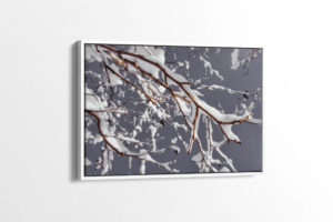 Monochrome Snowy Branch Canvas Print