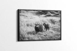 Cute Lambs Black and White Canvas Print