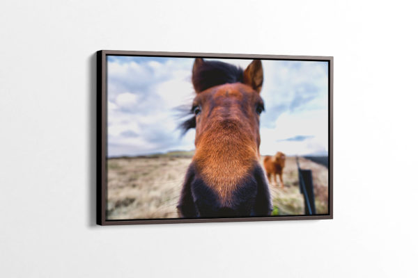 Icelandic Horse On the Nose Canvas Print