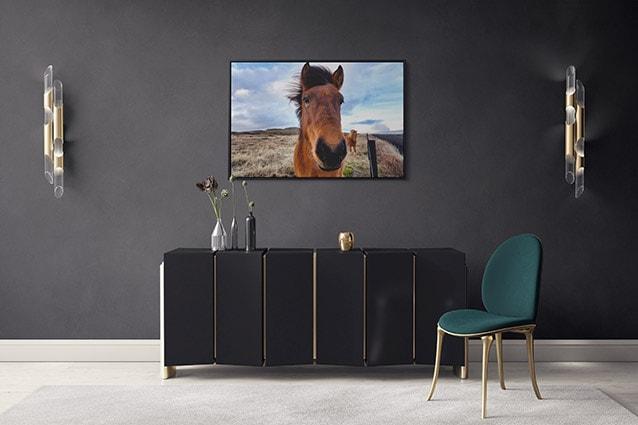 Beautiful Icelandic Horse Canvas Print