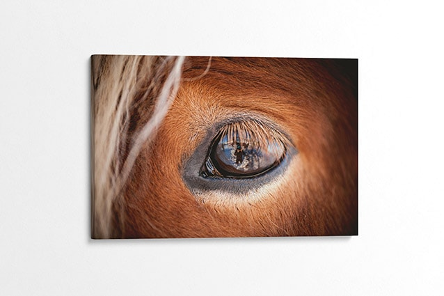 The Eye of the Horse Canvas Print